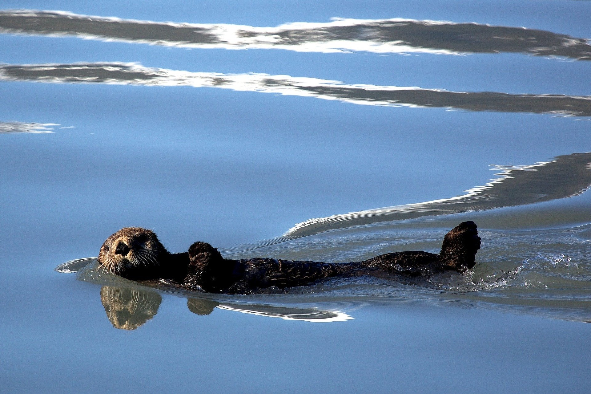 Sea animals - otters